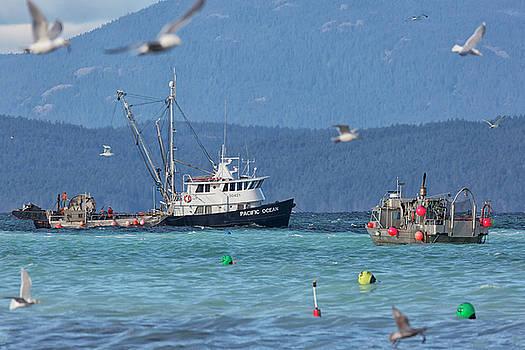 Randy Hall - Pacific Ocean Herring