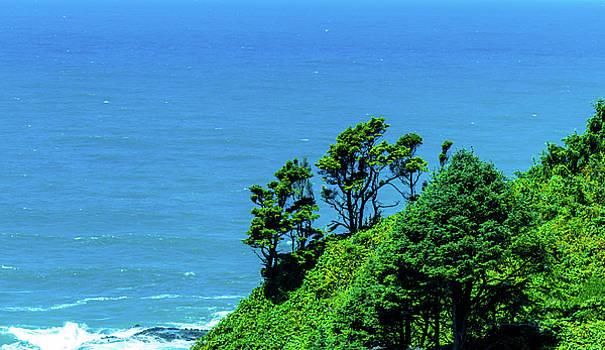 Pacific Ocean Trees by Jonny D
