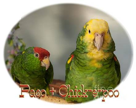 Paco and Chick-e-Poo by Zazu's House Parrot Sanctuary