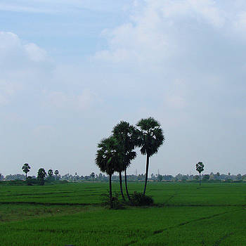 Paddy Fields near Anantapur, Andhra Pradesh, India by Iqbal Misentropy