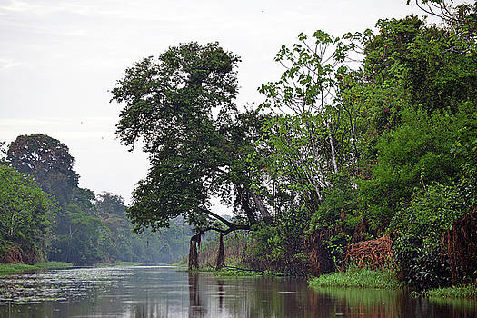 Harvey Barrison - Pahuachiro Cano, one of the many small creeks and tributaries of the large Rio Maranonn