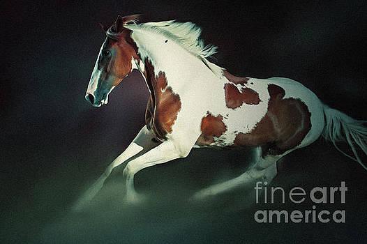 Dimitar Hristov - Paint Horse Running