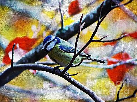 Painted Blue Tit by Clare Bevan