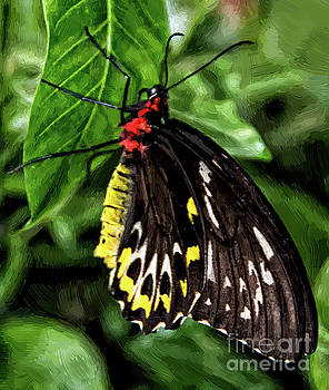 Painted Butterfly by Maggie Magee Molino