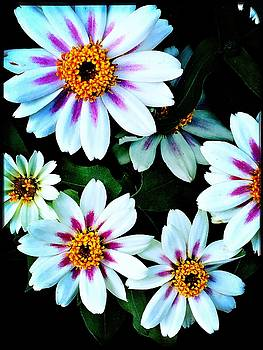 Painted Daisies by Susan Ferency