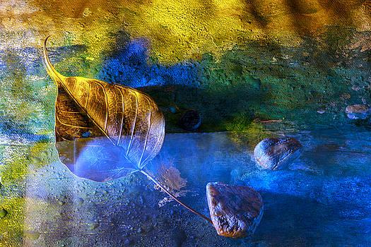 Painted dreams by Rohan Sandhir