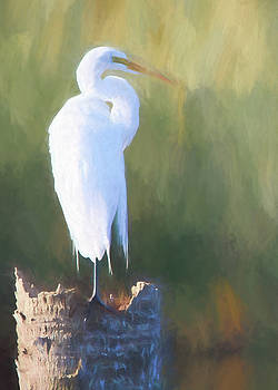Painted Egret by Terri Tiffany