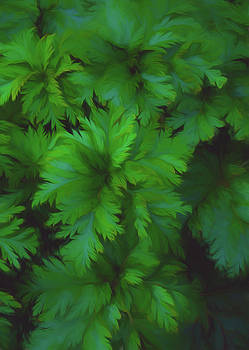 Painted Ferns by Jan Hagan