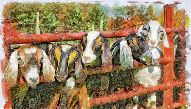 Painted Goats by Patricia Davis