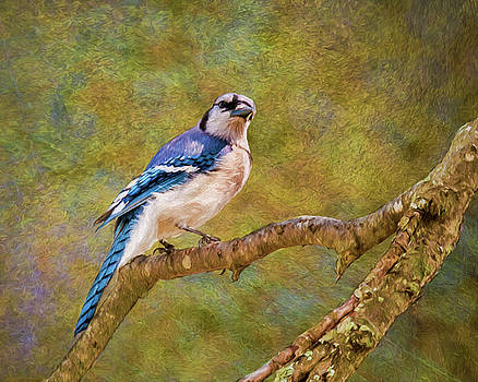 Painted Jay by Cathy Kovarik