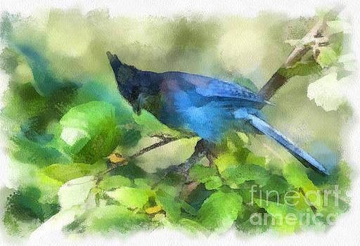 Rod Wiens - Painted Jay