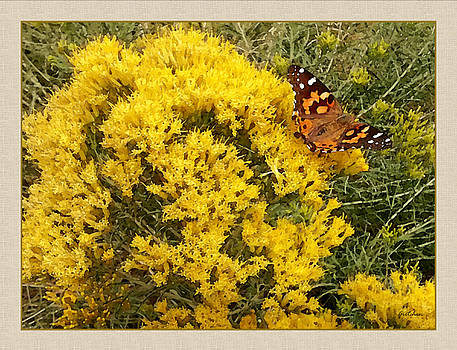 Painted Lady Butterfly on Yellow Sage by Gretchen Wrede