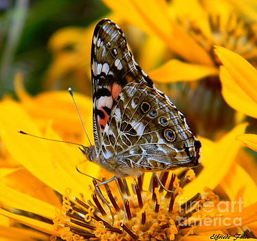 Painted Lady by Elfriede Fulda