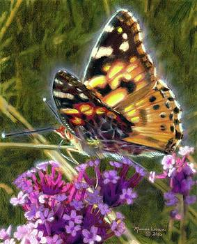 Painted Lady by Melissa Herrin