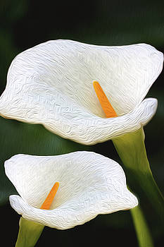 Painted Lilies  by Vanessa Thomas