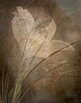Marsha Tudor - Painted Lily