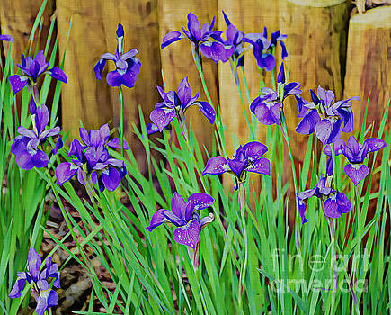 Painted Purple Iris by Kathy M Krause
