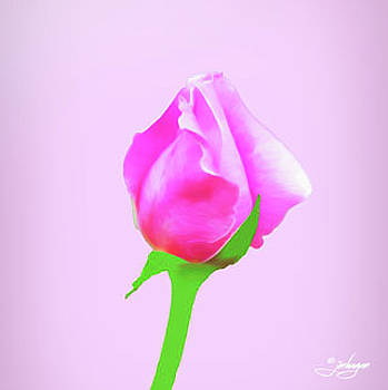 Painted Rose Bud by Jan Hagan