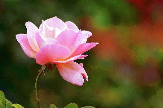 Painted Rose by Carol Montoya