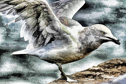 Painted seagull by Geraldine Scull