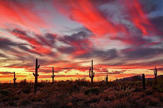Saija Lehtonen - Painted Sonoran Sunset Skies