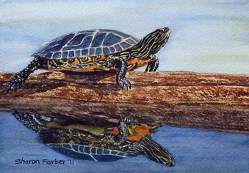 Painted Turtle III by Sharon Farber