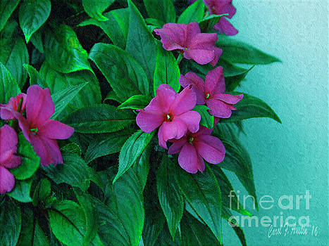 Painterly Magenta Impatients Flowering Plant by Carol F Austin