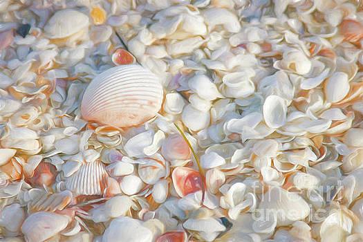 Painterly Seashells by Cindi Ressler