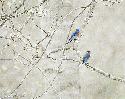Pair of Bluebirds by Tracey Tilson