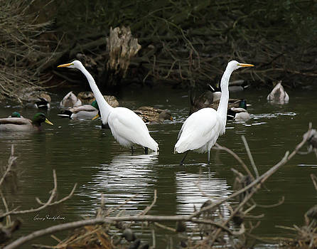 Pair of Egrets by George Randy Bass