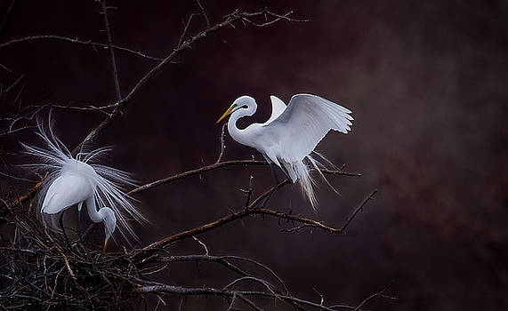 Pair Of Egrets by Kelly Marquardt