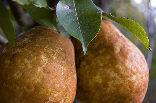 Pair of Pears by Scarlett Chambers