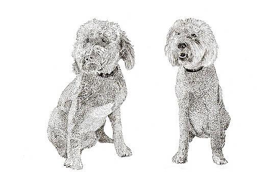 Jack Pumphrey - Pair of Pretty Poodles Pups