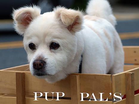 Pal by Kim