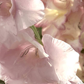 Pale Pink Glads by Sand And Chi