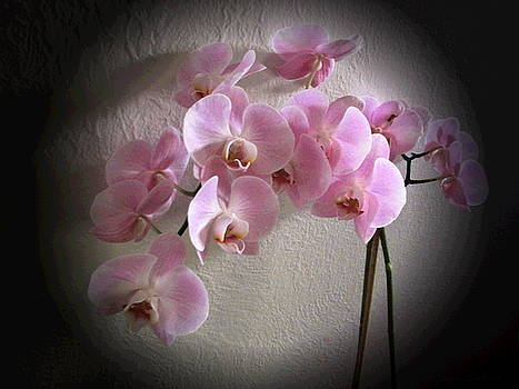Joyce Dickens - Pale Pink Orchids B W and Pink