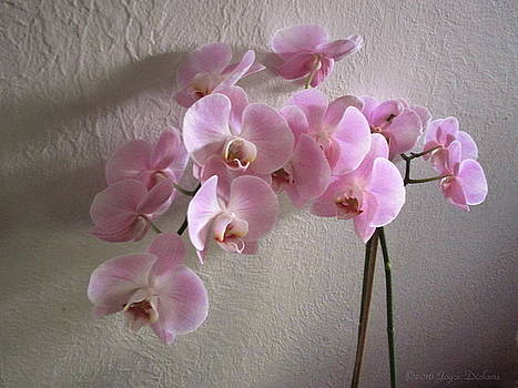 Joyce Dickens - Pale Pink Orchids