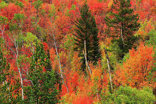 Palisades Autumn Palette by Greg Norrell