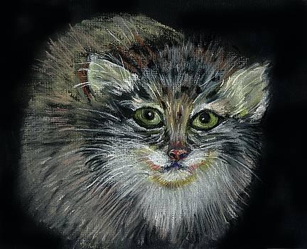 Olga Kaczmar - Pallas Cat