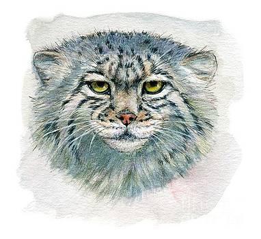 Pallas's cat 862 by Svetlana Ledneva-Schukina