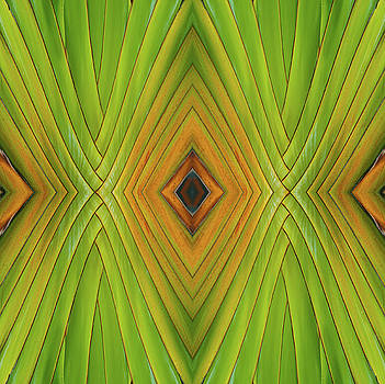 Michelle Constantine - Palm Abstract IV