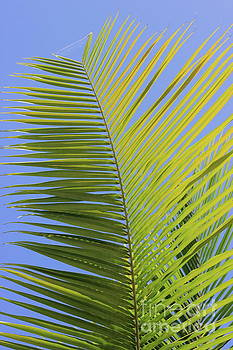Palm Abstract by The Art of Alice Terrill