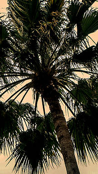 Palm Against the Sky by Frank Mari