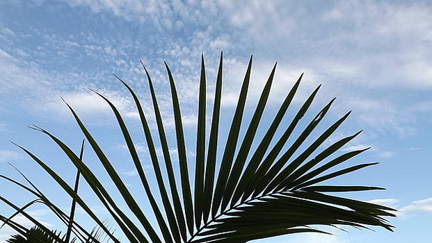 Palm and Clouds  by Don Koester