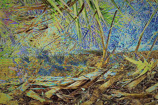 Palm and Needles by Robert Mitchell