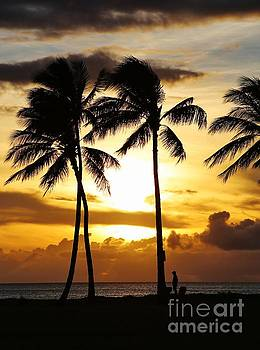Palm at Sunset by Craig Wood