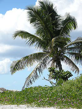 Palm by Audrey Venute