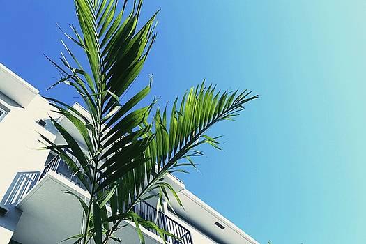 Palm Blue by Cortney Herron