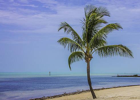 Paula Porterfield-Izzo - Palm Breeze