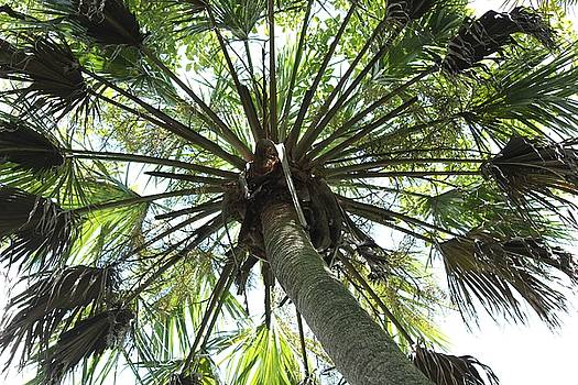 Palm Canopy by Theresa Willingham